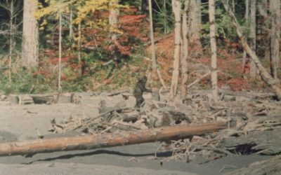 Bigfoot is real. Luckily, these top 4 branding myths aren't.